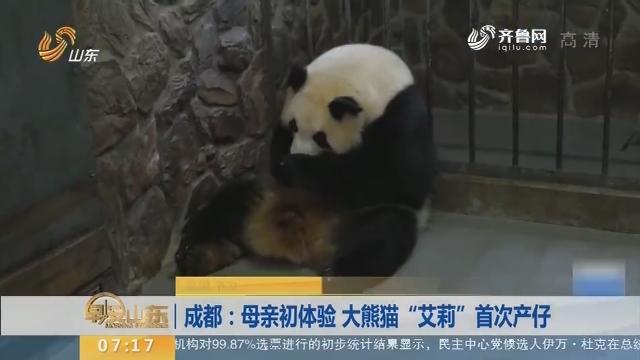 """【闪电新闻排行榜】成都:母亲初体验 大熊猫""""艾莉""""首次产仔"""