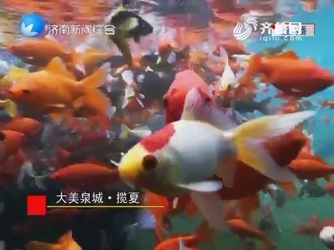 大美泉城·揽夏