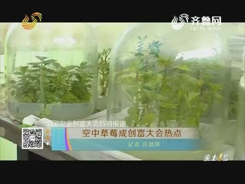 中国农业创富大会特别报道 空中草莓成创富大会热点