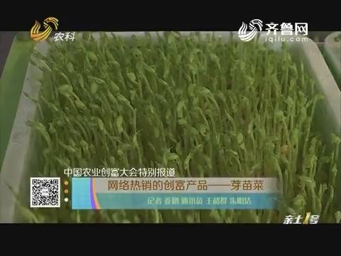 中国农业创富大会特别报道 网络热销的创富产品——芽苗菜