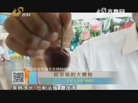 中国农业创富大会特别报道 超常规的大樱桃