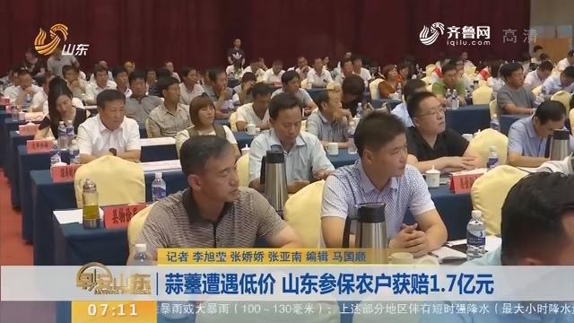 【闪电新闻排行榜】蒜薹遭遇低价 山东参保农户获赔1.7亿元