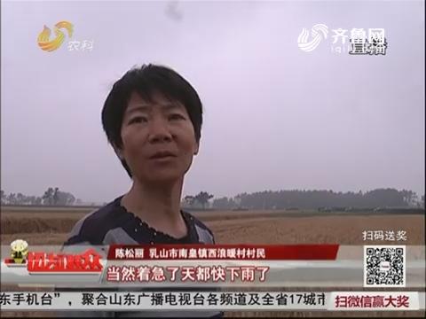 乳山:贫困家庭有了小麦专用收割机