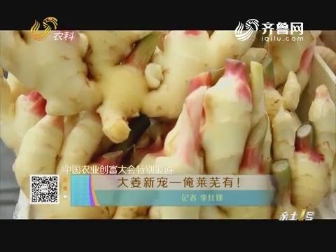 【中国农业创富大会特别报道】大姜新宠——俺莱芜有!