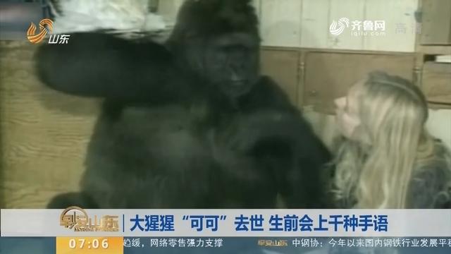 """【昨夜今晨】大猩猩""""可可""""去世 生前会上千种手语"""