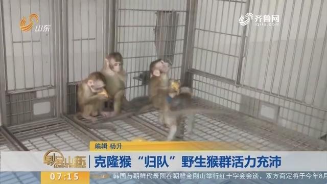 """【闪电新闻排行榜】克隆猴""""归队""""野生猴群活力充沛"""