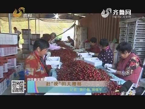 """【寻找最美果园】赶""""晚""""的大樱桃"""
