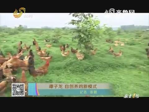 谭子龙 自创养鸡新模式