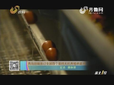 青岛田瑞签订全国首个鸡蛋无抗养殖承诺书
