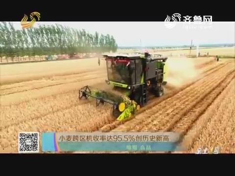 小麦跨区机收率达95.5%创历史新高