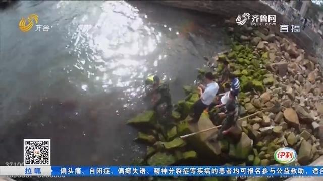 """威海:游客报警 一条""""大鱼""""搁浅乱石堆"""