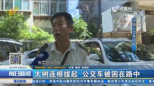 济南:大树连根拔起 公交车被困在路中