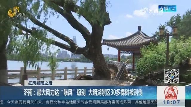 """【狂风暴雨之后】济南:最大风力达""""暴风""""级别 大明湖景区30多棵树被刮倒"""