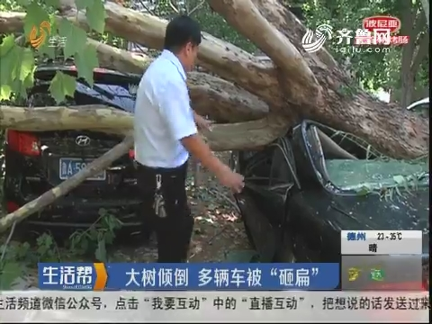 """济南:大树倾倒 多辆车被""""砸扁"""""""