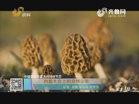 【中国农业创富大会特别节目】创富大会上的奇特山珍