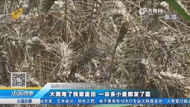 济阳:大雨淹了我家麦田 一亩多小麦都发了霉
