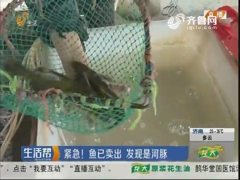 枣庄:紧急!鱼已卖出 发现是河豚