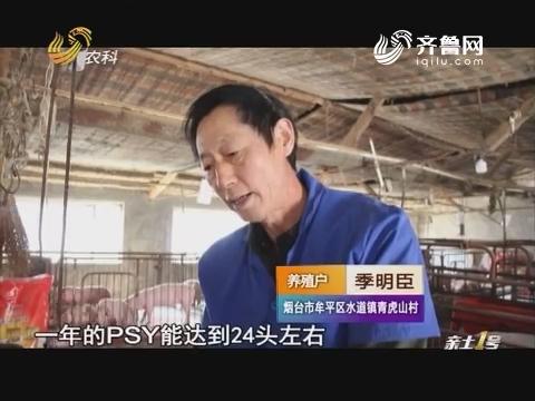 """""""集成饲料""""走猪场·寻找最美知猪人:他用三招提升母猪产子率"""
