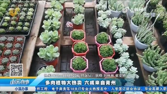 多肉植物大热卖 六成来自青州