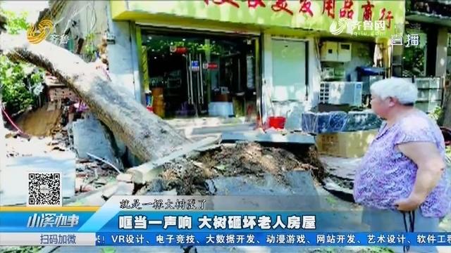 济南:哐当一声响 大树砸坏老人房屋