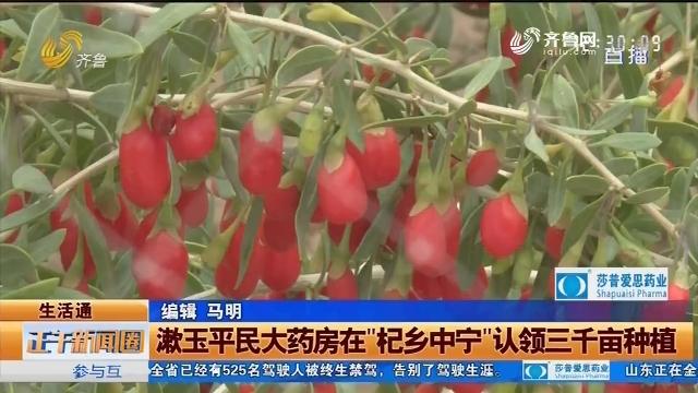 """漱玉平民大药房在""""杞乡中宁""""认领三千亩种植"""