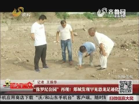 """""""侏罗纪公园""""再现!郯城发现罕见恐龙足迹化石"""