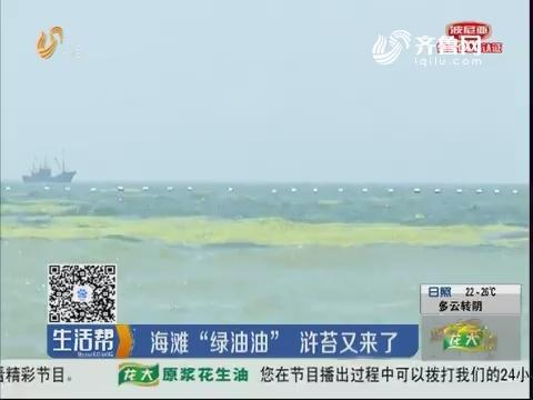 """青岛:海滩""""绿油油"""" 浒苔又来了"""