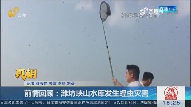【真相】前情回顾:潍坊峡山水库发生蝗虫灾害