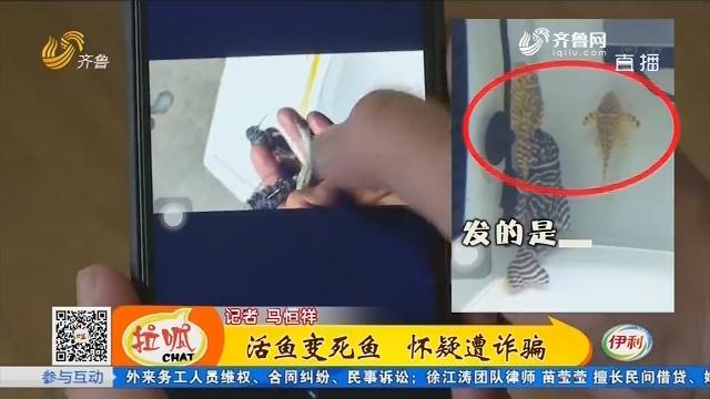 济宁:活鱼变死鱼 怀疑遭诈骗