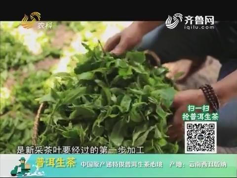 20180709《中国原产递》:普洱生茶