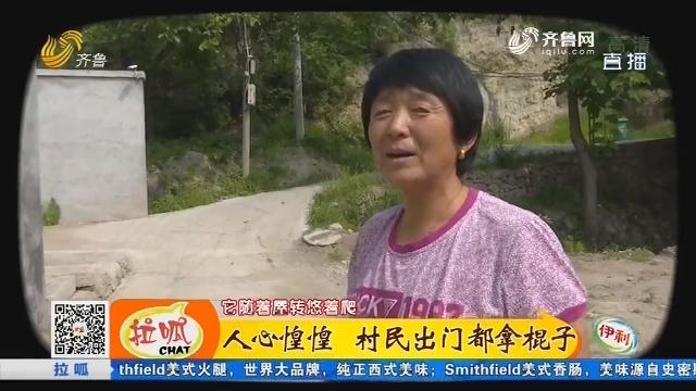 济南:人心惶惶 村民出门都拿棍子