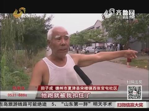 【民生热点】夏津:工程车开进玉米地 大片玉米被轧