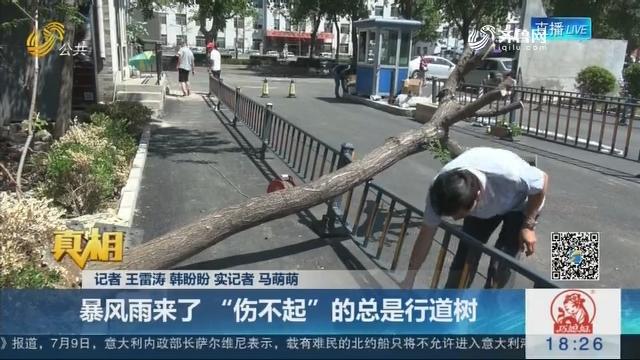 """【真相】谁动了城市的树根?暴风雨来了 """"伤不起""""的总是行道树"""