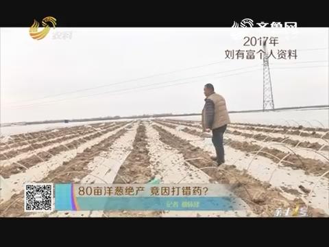 80亩洋葱绝产 竟因打错药?