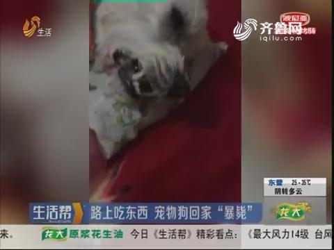 """潍坊:路上吃东西 宠物狗回家""""暴毙"""""""