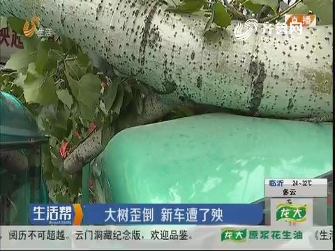 潍坊:大树歪倒 新车遭了殃