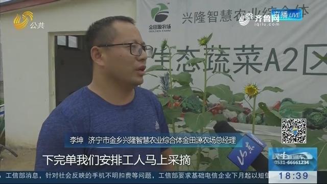 【聚焦乡村振兴】金乡兴隆镇:足不出户 新鲜蔬菜送进百姓家