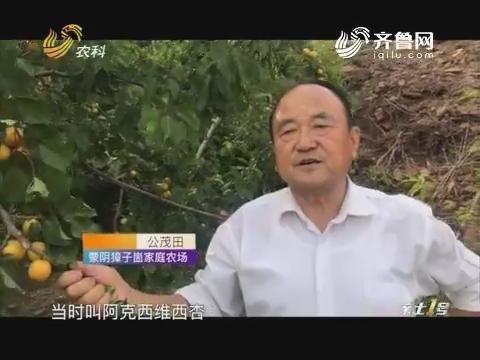 【寻找最美果园】七旬老汉育出优质杏