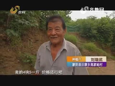 黄桃吃紫牛 一斤卖七块