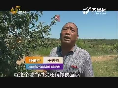 【天下五谷·果蔬保姆在行动】懒汉不懒 石头山上种苹果