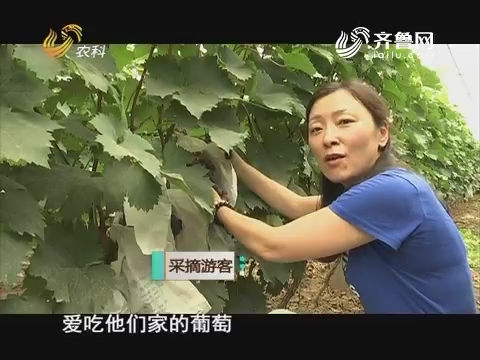 【农科大户俱乐部】限产的葡萄