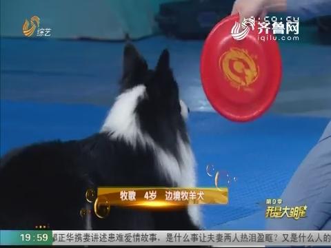 """20180711《我是大明星》:最聪明""""汪星人""""来袭 李鑫献唱被""""吓坏"""""""