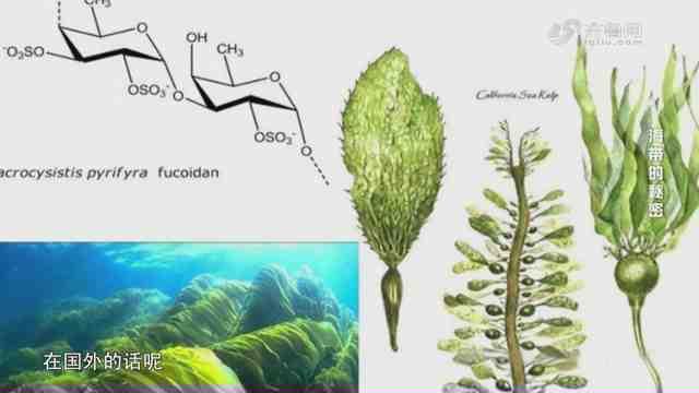 《生活大求真》:岩藻多糖是什么糖?糖尿病人能吃吗?
