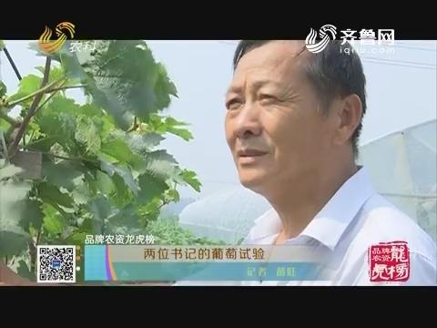 【品牌农资龙虎榜】两位书记的葡萄试验