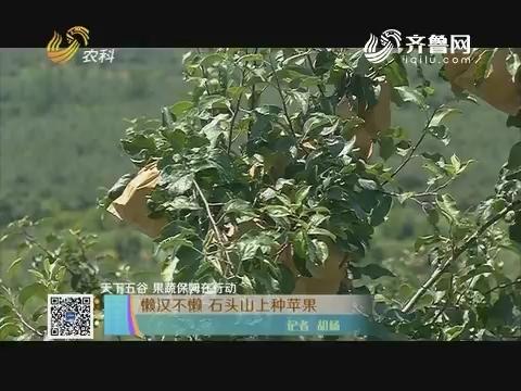 【天下五谷 果蔬保姆在行动】懒汉不懒 石头山上种苹果