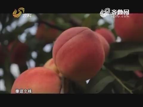 """桃""""痴""""刘光战"""