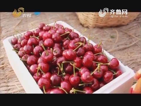 【金龟二代·土壤健康行】顶级樱桃长成记