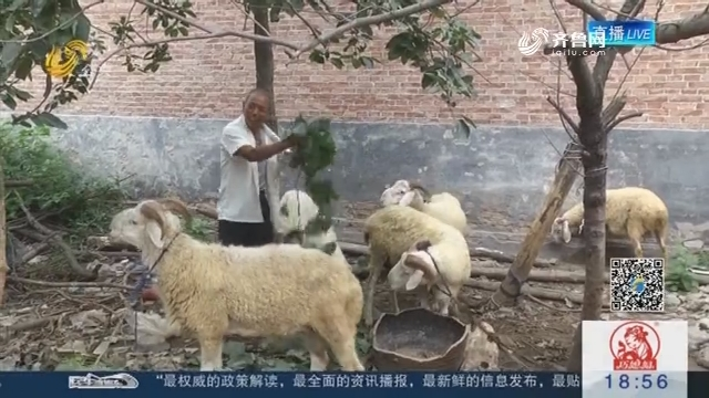 """菏泽:团伙角色扮演相亲 专骗中老年""""剩男"""""""