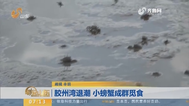 【闪电新闻排行榜】胶州湾退潮 小螃蟹成群觅食