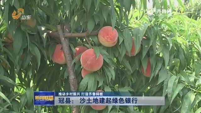 【推动乡村振兴 打造齐鲁样板】冠县: 沙土地建起绿色银行